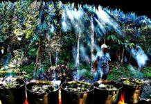 ayahuasca documentary